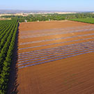 Using the sun and agricultural residue to control pests